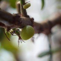 Денежное дерево :: Дмитрий Горр