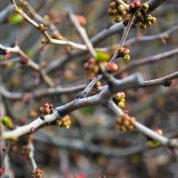 Весна :: Андрей Кондратович