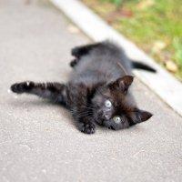 Игривый котенок :: Марина Романова