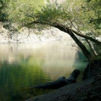 Река Белая. :: Надежда