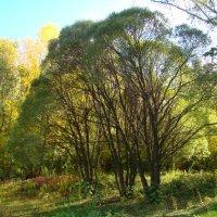 Осень в Ботаническом саду :: марина ковшова