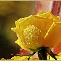 Желтая прозрачность :: Лидия (naum.lidiya)
