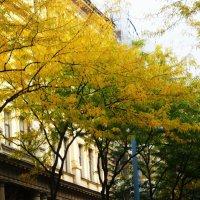 Осень в Вене :: татьяна
