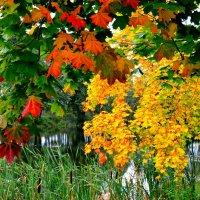 Осенний вид. :: Алексей Жуков