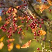 Рисует осень живописные картины... :: Галина Стрельченя