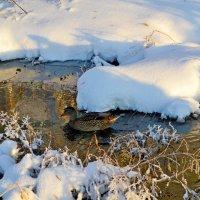На зимовке :: Александр Канышев