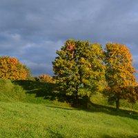 Ходила осень.. :: zoja