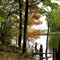 Осенний пруд. :: Борис Митрохин