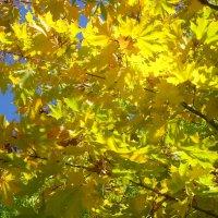 Осенний клён :: BoxerMak Mak