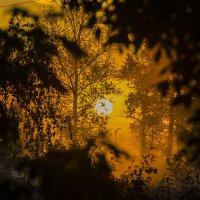 Осенний рассвет! :: Павел Данилевский