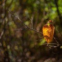 Осенняя весточка :: Наталья Киселёва