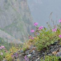 Цветы на горных склонах :: Мария Климова
