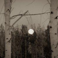 Ночь, восход луны. :: Лариса Димитрова