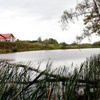 Сельский пруд. :: Борис Митрохин