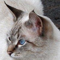 Голубоглазая. :: Vit Falcone