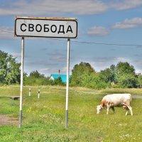 свобода :: Иван Владимирович Карташов