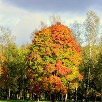 В парке осенью  /6/ :: Сергей