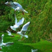Чайки над озером :: Nina Yudicheva