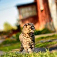 Кошка Сима :: Юрий Фёдоров