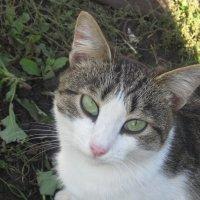 Котик :: Надежда