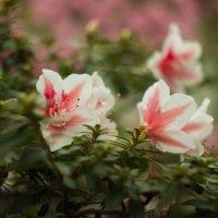 Ботаника :: Ketrin Darm