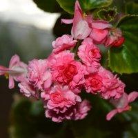 Мой цветок :: Маргарита Кириллова