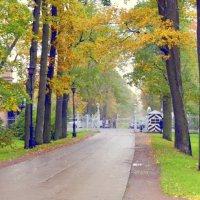 В парке осенью  /13/  Подкапризовая дорога :: Сергей