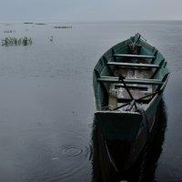Дождь :: Дмитрий Близнюченко