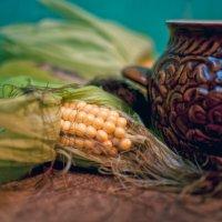 урожай :: Тася Тыжфотографиня