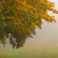туман :: Михаил Жуковский