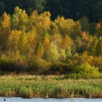 золотая осень :: Alla Swan