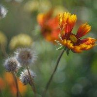 Осень :: Irina Polkova