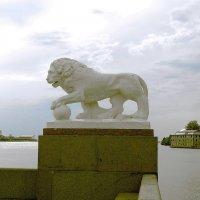 Питерский лев. :: Лия ☼