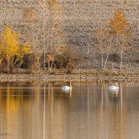 Осень на Красногорском озере :: Галина Шепелева