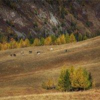 Осень на просторах Алтая. :: Павел Сухоребриков