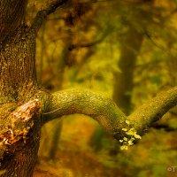 В лесу :: Татьяна Каримова