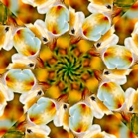 Цветы :: Vlad - Mir