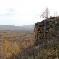 Березка на скале :: Анна
