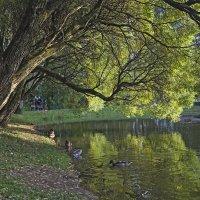 Осенний , солнечный абажур, у озера. :: Viacheslav Birukov
