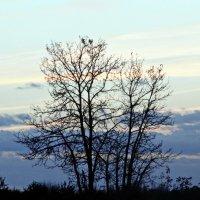 Одинокое дерево :: Шура Еремеева