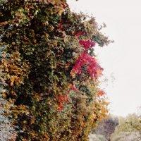 Осенняя дорога :: Шура Еремеева