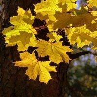 осень в лесу :: Александр Прокудин