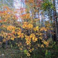 Осень - золотая пора... :: Valentina