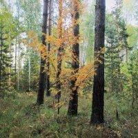 Краски осеннего леса. :: Valentina