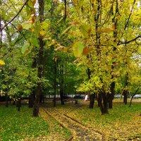 И до нас дошла Золотая (последний день сентября) :: Андрей Лукьянов