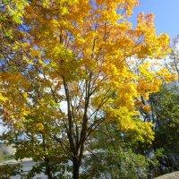 Осень во всей красе :: BoxerMak Mak