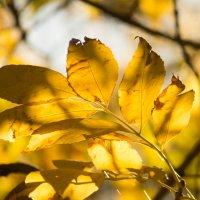 осень :: Надежда Щупленкова