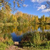 Золотая осень в Подмосковье :: Юрий Бичеров