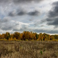 лес :: Геннадий Федоров