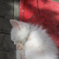 Спящий котёнок... :: Владимир Павлов